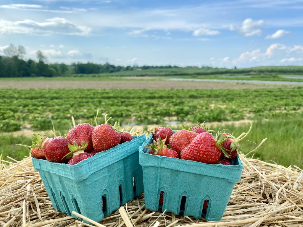Two pints of strawberries overlooking farm