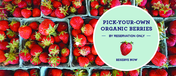 click here for pick-your-own reservations